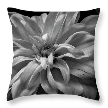 Throw Pillow featuring the photograph Moonlit Dahlia by Chris Scroggins