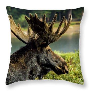 Moose Adventure Throw Pillow by Steven Parker