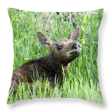 Moose Baby Throw Pillow