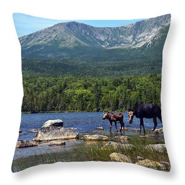 Moose Baxter State Park Maine 2 Throw Pillow