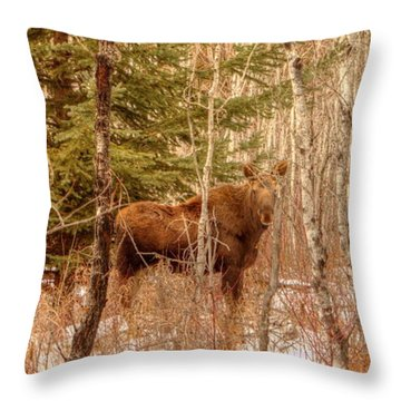 Moose Calf Throw Pillow by Jim Sauchyn