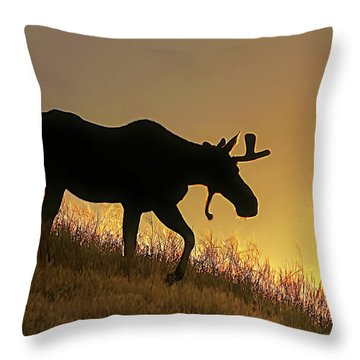 Throw Pillow featuring the photograph Moose Evening Wander by Jennie Marie Schell