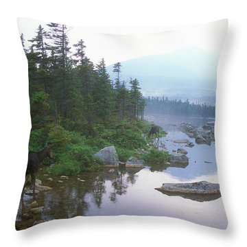 Moose In Foggy Evening  Throw Pillow