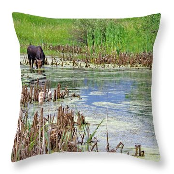 Moose In The Marsh Throw Pillow by Matt Helm