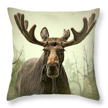 Throw Pillow featuring the photograph Moose In The Woodland Forest by Jennie Marie Schell