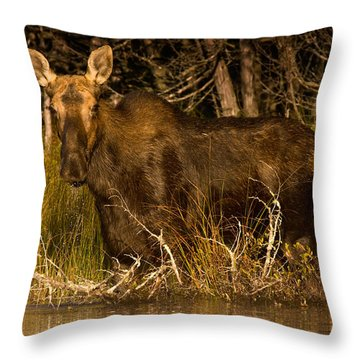 Moose Of Prong Pond Throw Pillow