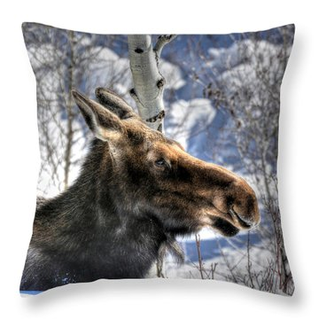 Moose On The Loose Throw Pillow