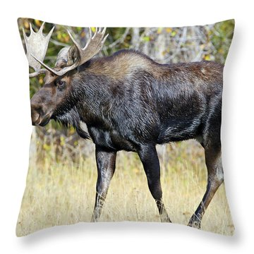 Moose On The Move Throw Pillow