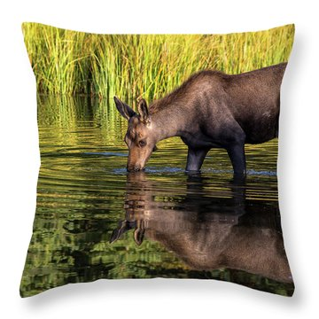 Throw Pillow featuring the photograph Moose Reflections by Mary Hone