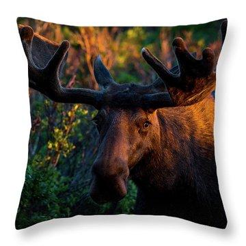 Moose Sunrise Throw Pillow