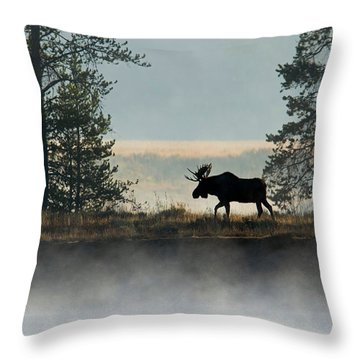 Moose Surprise Throw Pillow