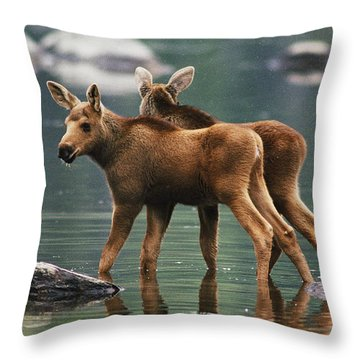 Moose Twins Alces Alces Americana Throw Pillow