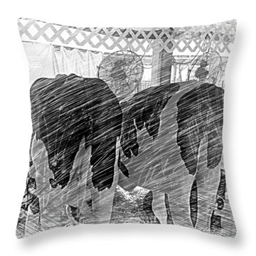 Moo...ving At The County Fair Throw Pillow