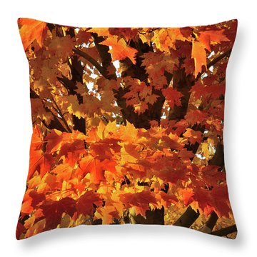 Throw Pillow featuring the photograph Moraine Hills Sugar Maple by Ray Mathis