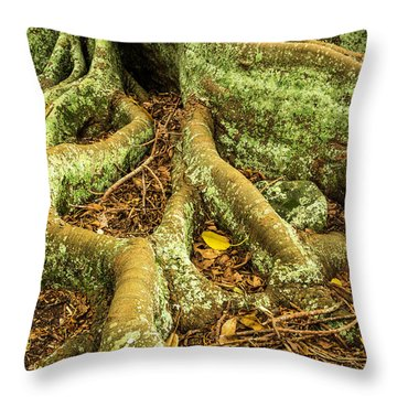 Throw Pillow featuring the photograph Moreton Bay Fig by Werner Padarin