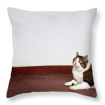 Throw Pillow featuring the photograph Morfeas by Laura Melis