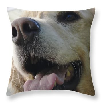 Morgie Throw Pillow by Rhonda McDougall