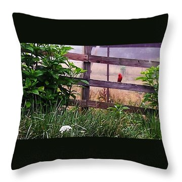 Morning Cardinal Throw Pillow