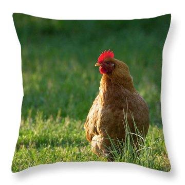 Morning Chicken Throw Pillow