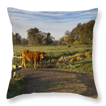 Morning Cow Throw Pillow