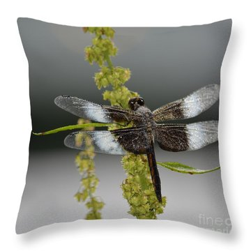 Morning Dew Throw Pillow by Randy Bodkins