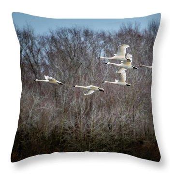 Morning Flight Of Tundra Swan Throw Pillow
