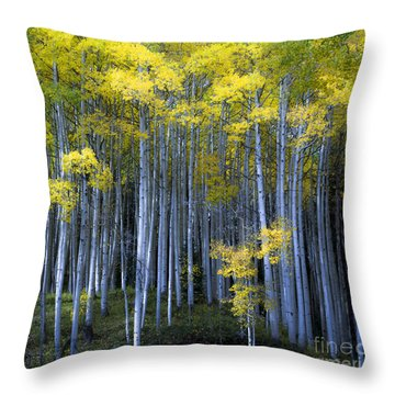 Morning Forest Throw Pillow by The Forests Edge Photography - Diane Sandoval