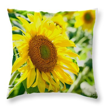 Morning Glory Farm Sun Flower Throw Pillow