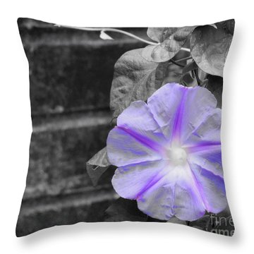 Morning Glory Flower Throw Pillow by Chad and Stacey Hall