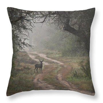 Morning Highlight  Throw Pillow
