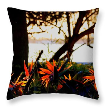 Throw Pillow featuring the photograph Morning In Florida by Diane Merkle