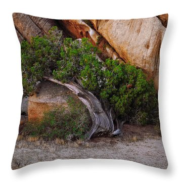 Morning Juniper Throw Pillow