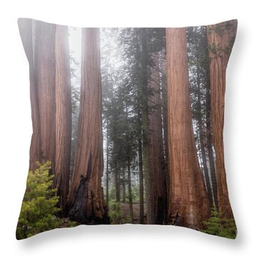Throw Pillow featuring the photograph Morning Light In The Forest by Peggy Hughes