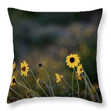 Throw Pillow featuring the photograph Morning Light by Kelly Wade