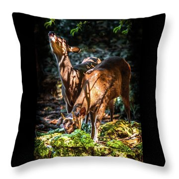 Morning Light Of Dawn Throw Pillow by Karen Wiles