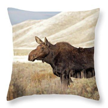 Morning Moose Throw Pillow