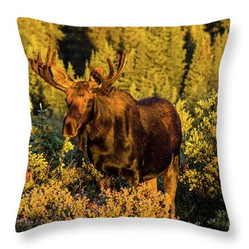 Morning Moose Throw Pillow
