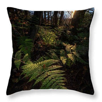 Throw Pillow featuring the photograph Morning On The Coastal Trail by Rick Berk