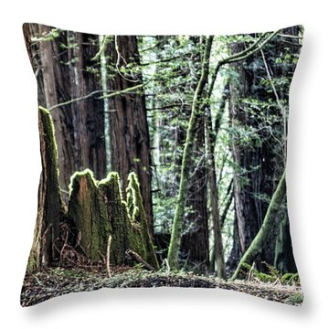 Throw Pillow featuring the photograph Morning Redwoods by Shirley Mangini