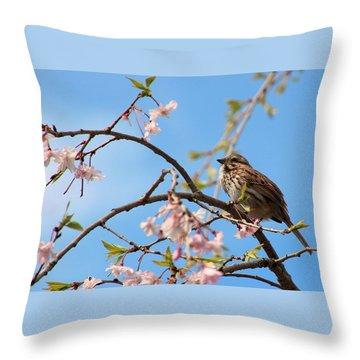 Morning Song Sparrow Throw Pillow by Rosanne Jordan