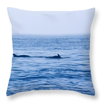 Morning Search For Food Throw Pillow by Allan Levin