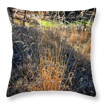 Morning Sun Backlights Fall Grasses In Glacial Park Throw Pillow