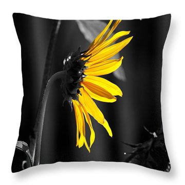 Morning Sun Throw Pillow by Clayton Bruster