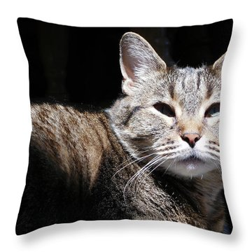 Throw Pillow featuring the photograph Morning Warmth by Charles Ables