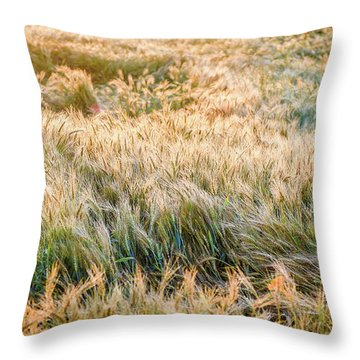 Morning Wheat Throw Pillow