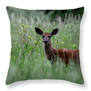 Morninng Deer Throw Pillow