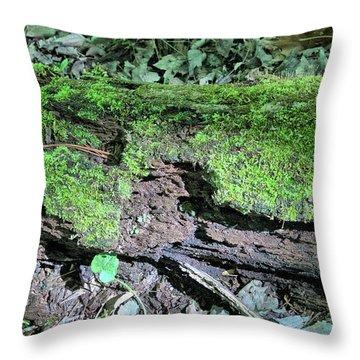 Throw Pillow featuring the photograph Moss On A Log 2 by Richard Goldman