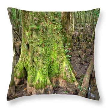 Throw Pillow featuring the photograph Mossy Cypress by Michael Colgate