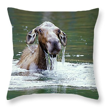 Mossy Moose Throw Pillow