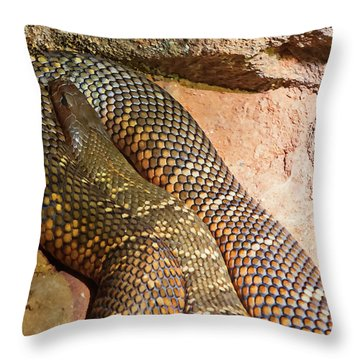 Throw Pillow featuring the photograph Most Venomous Snake  by Miroslava Jurcik